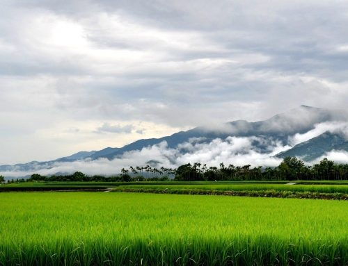 Taiwan's agriculture heads for prime opportunities in the heart of South Asia: India