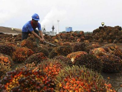 indonesia_palm_oil_08112013