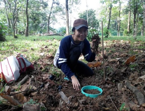 Trees' species and age affect carbon emissions